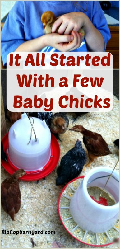 Baby chicks are so stinking cute! Our homestead started with the gateway animal.... Chickens!