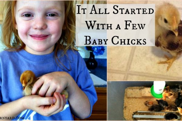 It All Started With a Baby Few Chicks