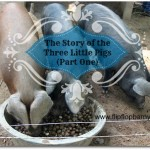 How we got started with pigs (part one) | www.flipflopbarnyard.com