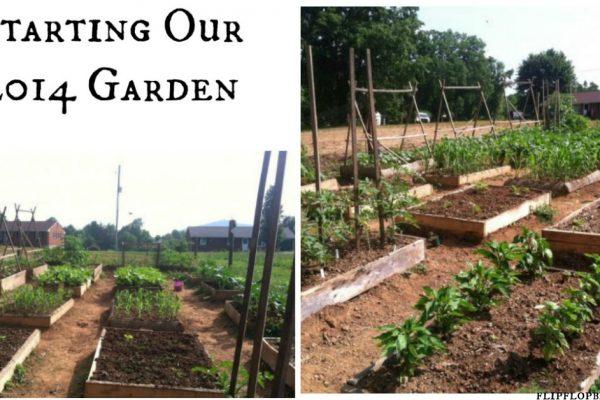 Starting our 2014 garden