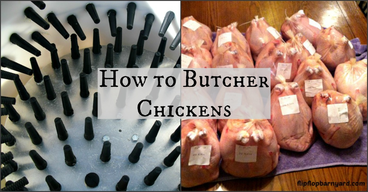 How to butcher chickens at home.