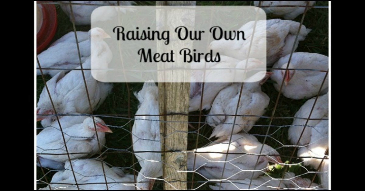 Raising Our Own Meat Birds