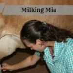 Machine milking my friend's cow
