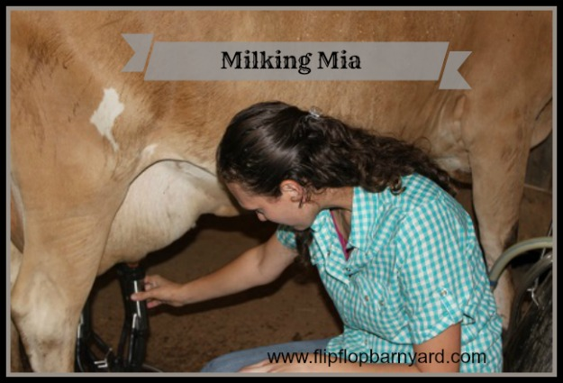 Machine milking for a friend | www.flipflopbarnyard.com