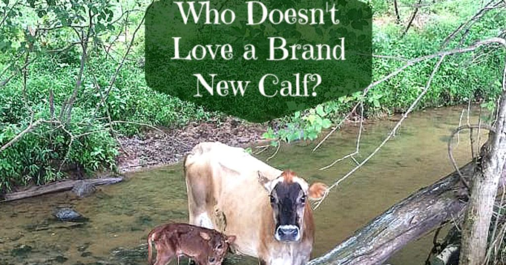 Check out the brand New Jersey calf.