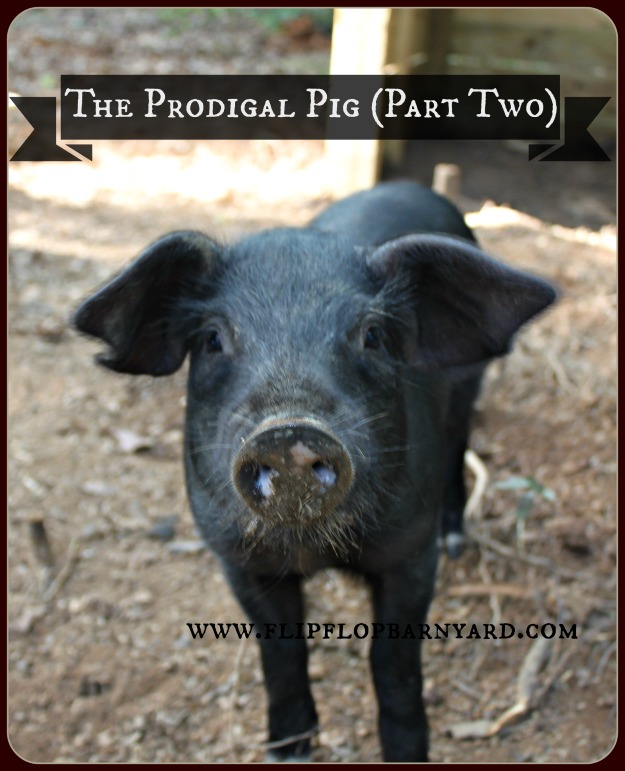 Part two of how we got started with pigs. | www.flipflopbarnyard.com