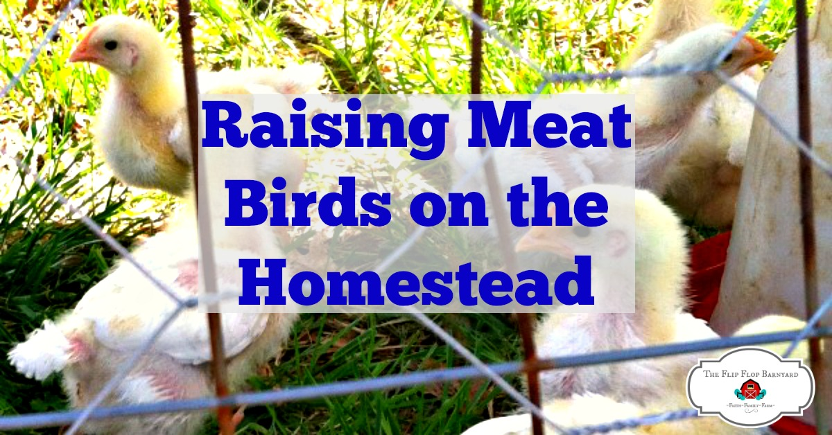 Raising Meat Birds on the Homestead