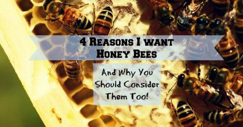 Reasons to have honey bees.