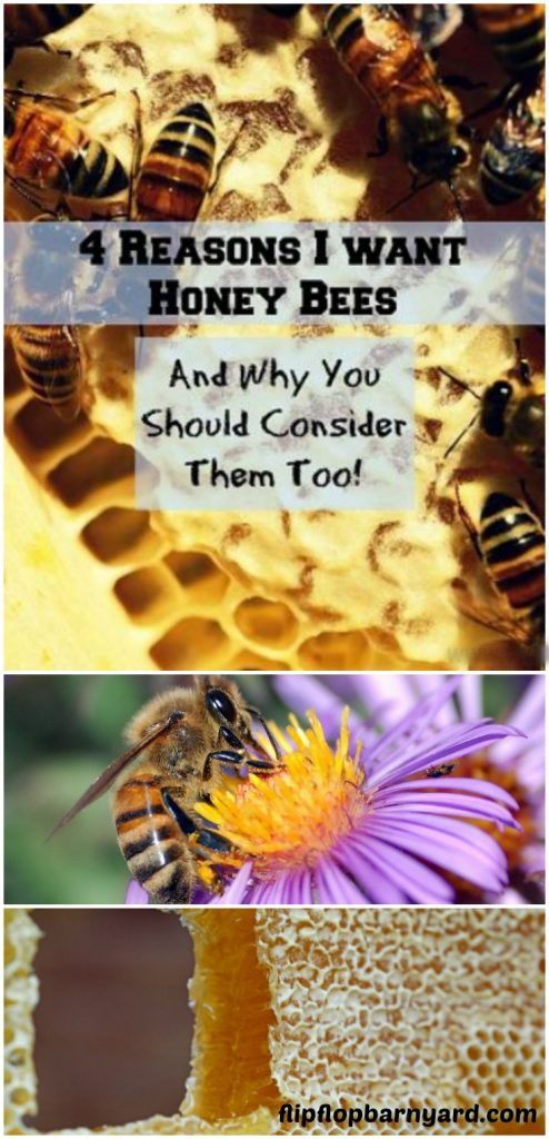 Reasons to have bees on the homestead.