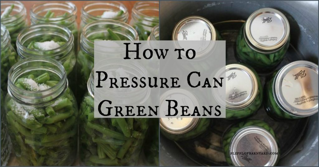 How to pressure can green beans.