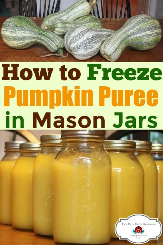 """A photo collage of cushaw pumpkins on top and jars of pumpkin puree on the bottom with the words """"How to freeze pumpkin puree in mason jars"""" in between them."""