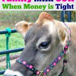 A photo of a cow with the words How to Prepare For a Family Milk Cow (On a Tight Budget) above it