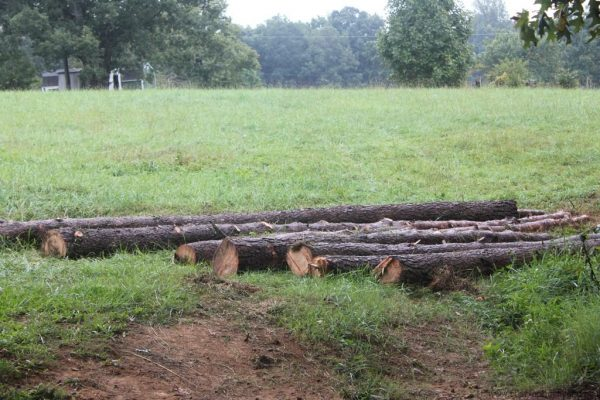 Logs to build a barn   www.flipflopbarnyard.com