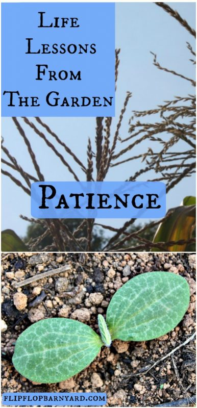 Learning patience is one of the many great lessons learned in the garden.