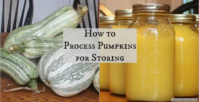 How to process pumpkins for storing. Making simple pumkin puree for freezing in jars or bags.