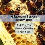 4 reasons I want honey bees and why you should consider them too