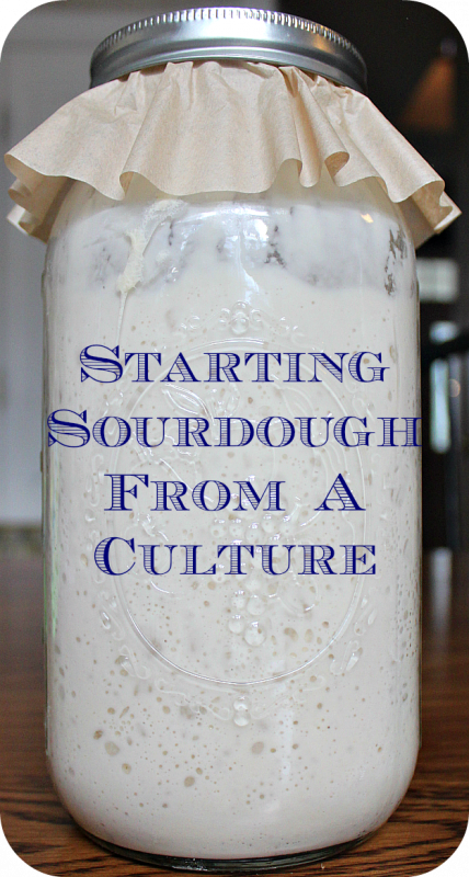 Starting sourdough from a culture. Sourdough is easy to start from a culture. The culture has a great flavor and makes the sourdough breads and baked goods so delicious.