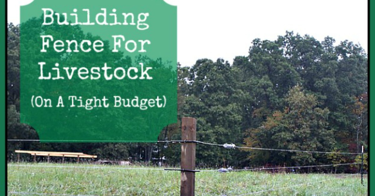 Building Fence For Livestock (On A Tight Budget)