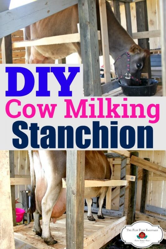This Step by step cow milking stanchion tutorial will help you build your own diy milking stanchion. If you have a milk cow or are making plans for one, this will help you with your build your cow stanchion. 