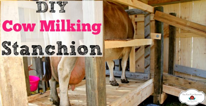 How To Build a Cow Milking Stanchion (Elevated)