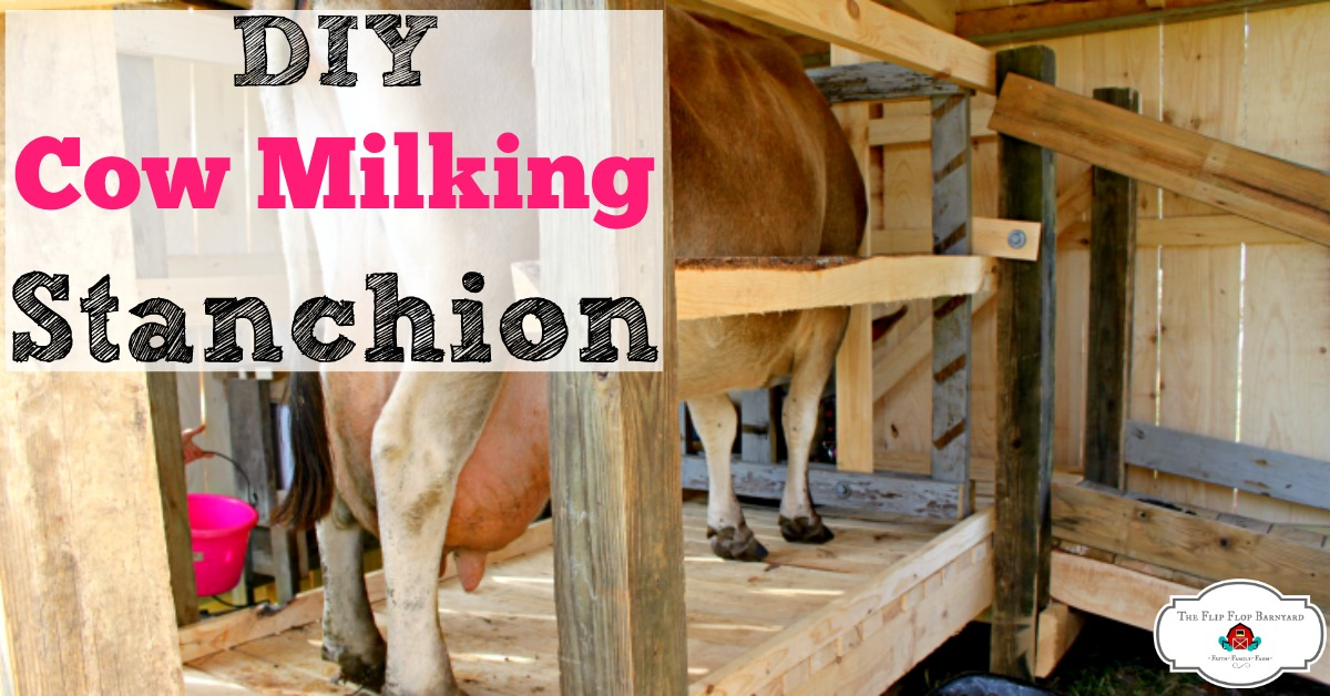 How to build a cow milking stanchion. DIY Cow Milking Stanchion