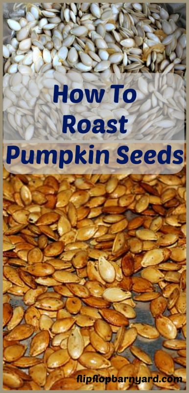 How to roast pumpkin seeds. Roasted pumpkin seeds are a healthy and delicious snack. Roasting pumpkin seeds is such an easy task for a great snack.
