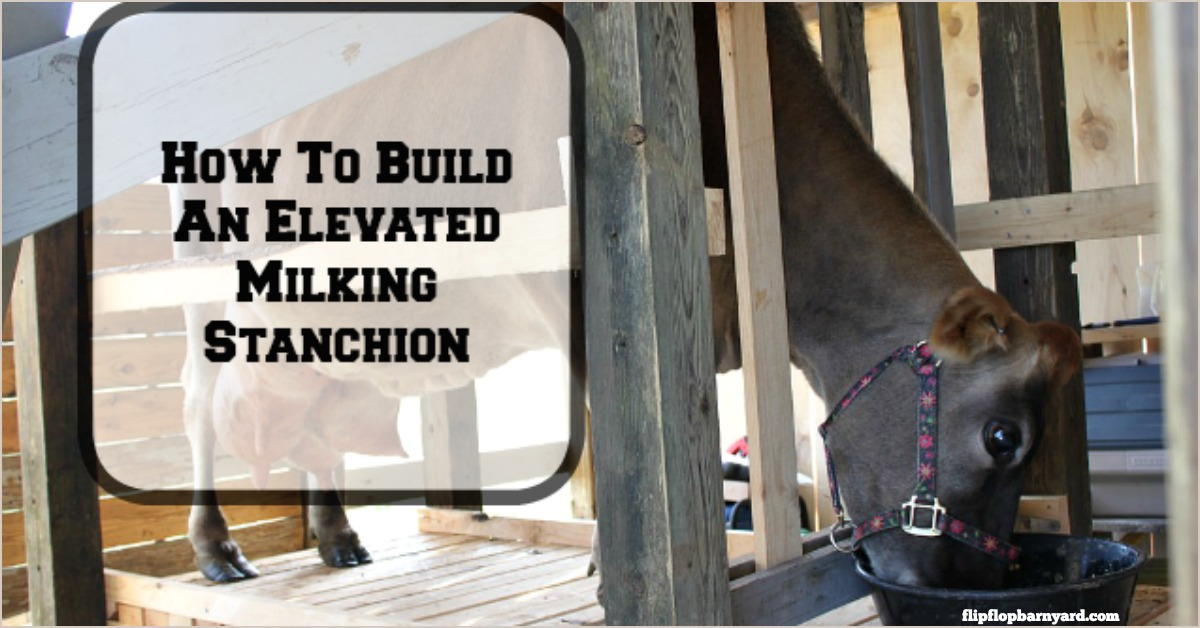 How To Build An Elevated Milking Stanchion