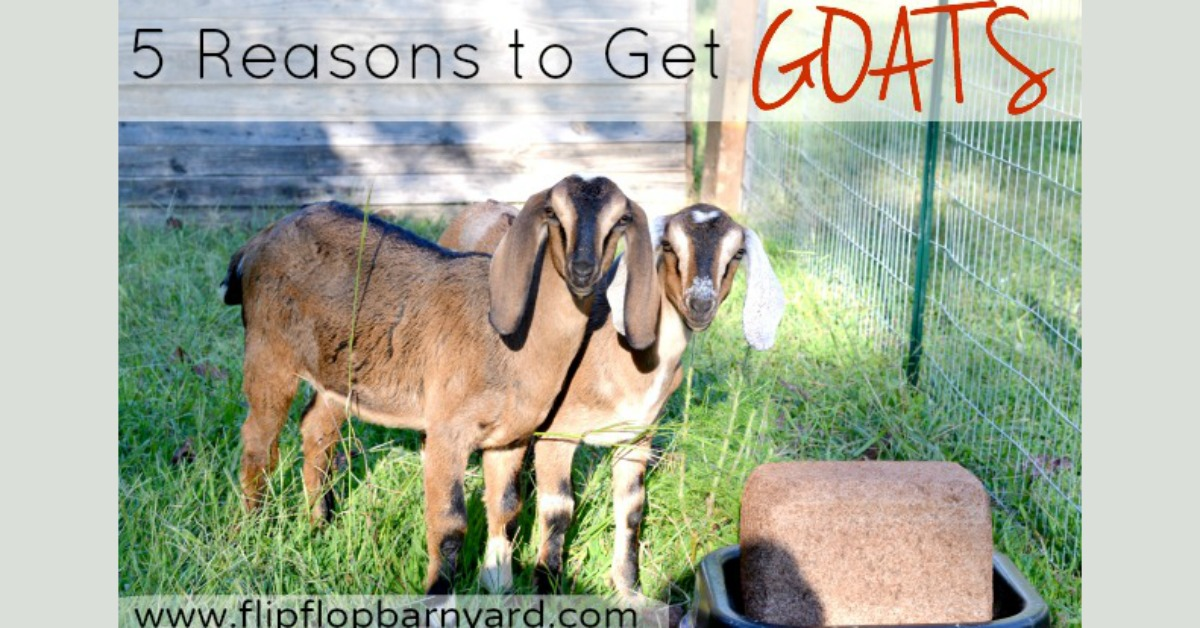 Five Reasons to Get Goats