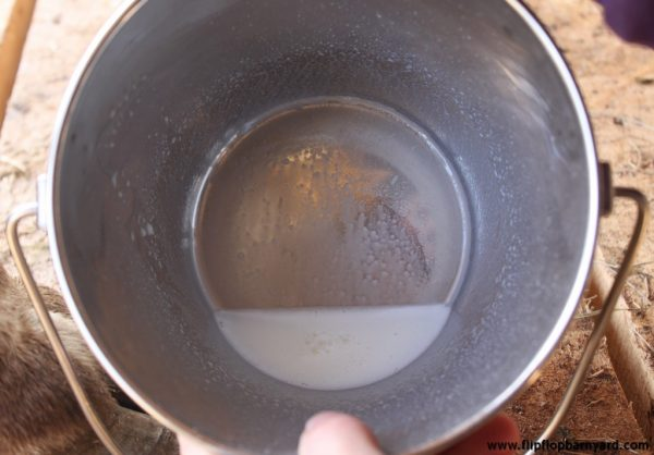 a bucket with cow's milk in it