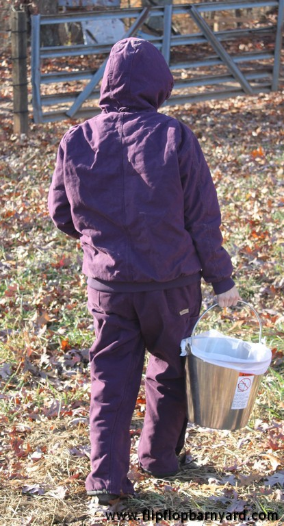 person carrying full milk pail in from the barn