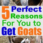"a photo collage of goats with the words ""5 perfect reasons for you to get goats"""