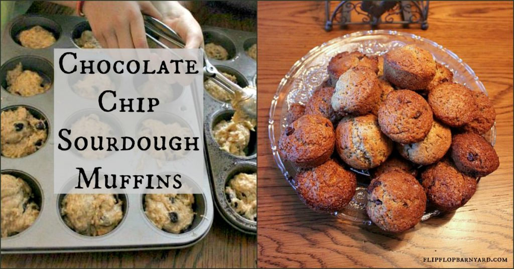 Chocolate chip sourdough muffins.