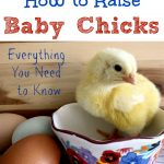 How to Raise Baby Chicks. Baby chicks are so cute and fun. We love getting new baby chicks every spring. Here's everything you need to know to get started with them.