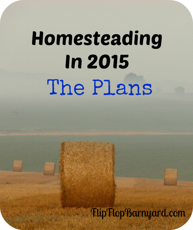 Homesteading In 2015 The Plans | The Flip Flop Barnyard