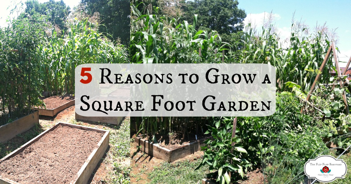 5 Reasons to Grow a Square Foot Garden