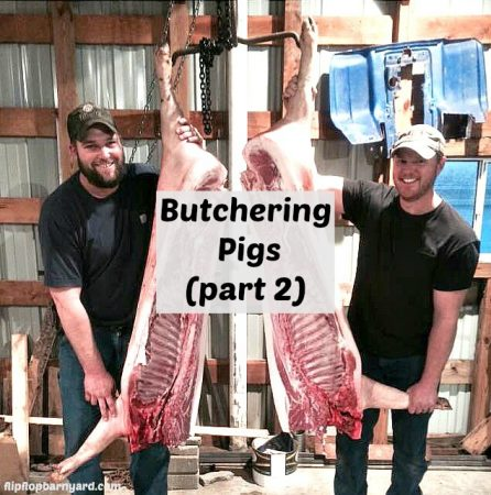 Butchering Pigs at Home