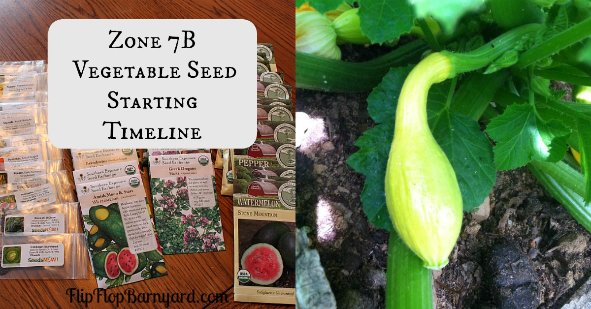 Vegetable Seed Starting Timeline for Zone 7B