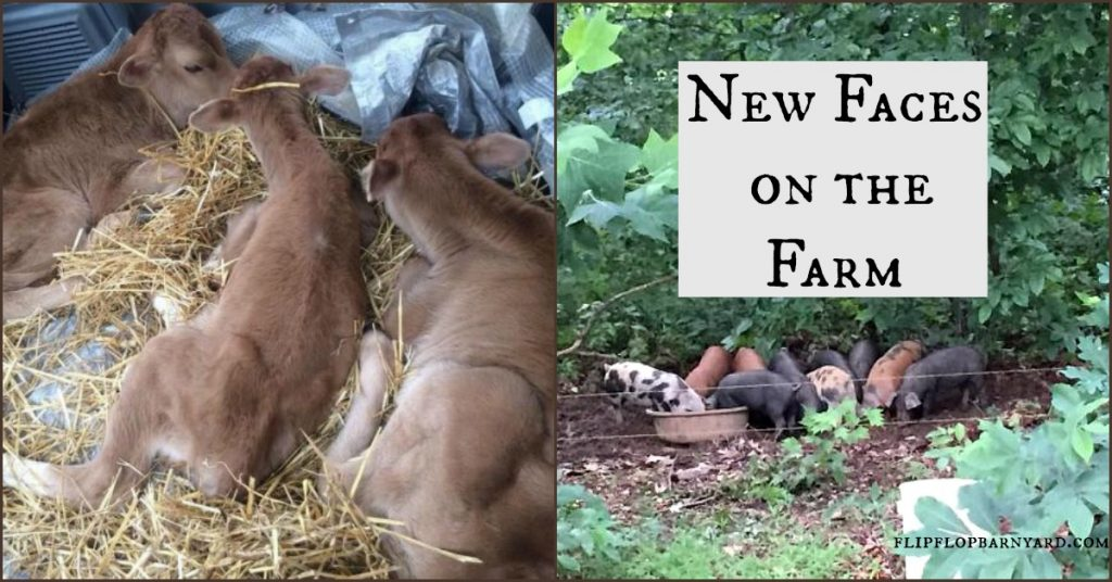 A lot of changes happened on our farm this year.