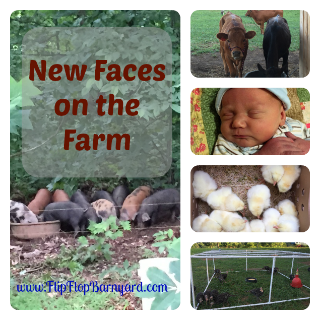 New Faces on the Farm