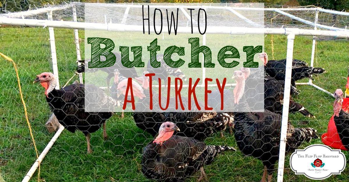 93770f26e1ded How to Butcher a Turkey- Humanely