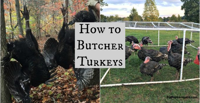 How to Butcher Turkeys at home