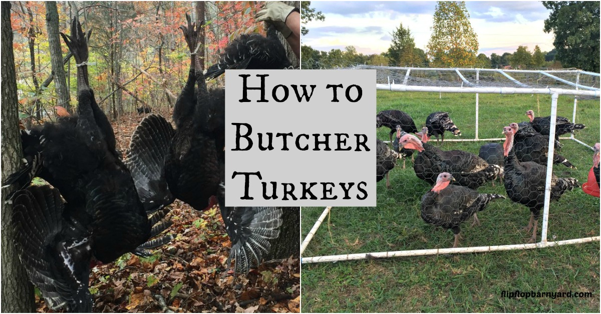 How to Butcher Turkeys