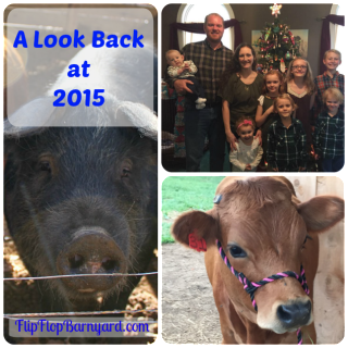 A Look Back at 2015