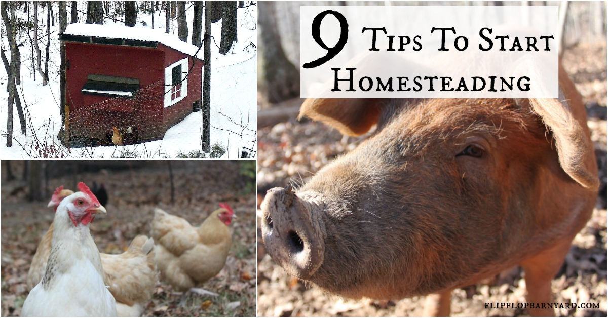 9 tips to help you get started on your homestead journey