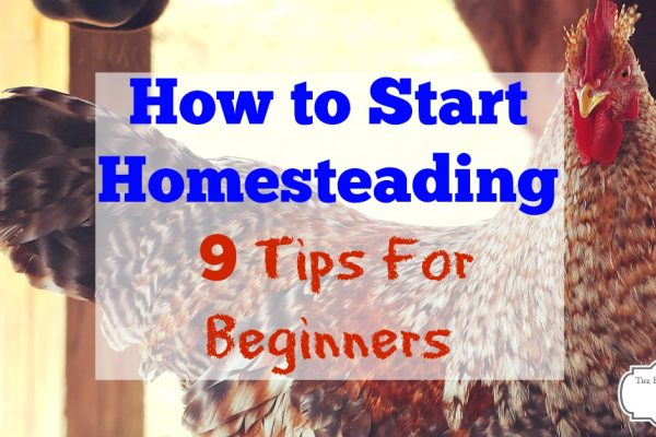 How to start homesteading - 9 tips for beginners. If you want to start your own homestead and dream of a sustainable living lifestyle, there are some easy steps you can take to get started on your homesteading journey now.
