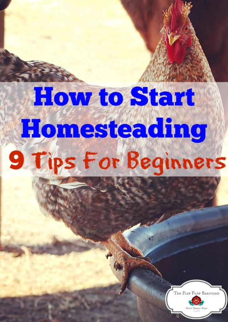 "a picture of a rooster and the words ""How to start homesteading- 9 tips for beginners"""