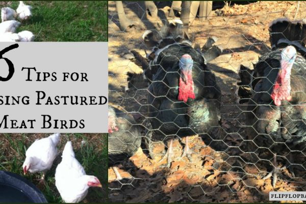 6 Expert Tips For Raising Pastured Poultry