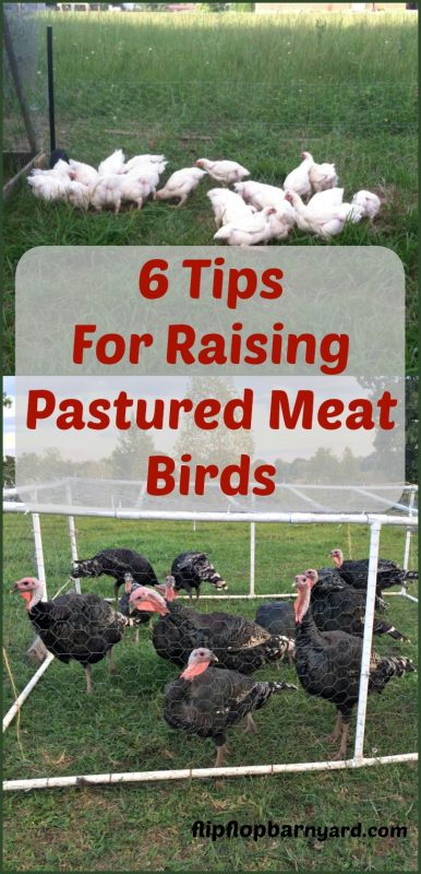 How to raise pastured meat birds