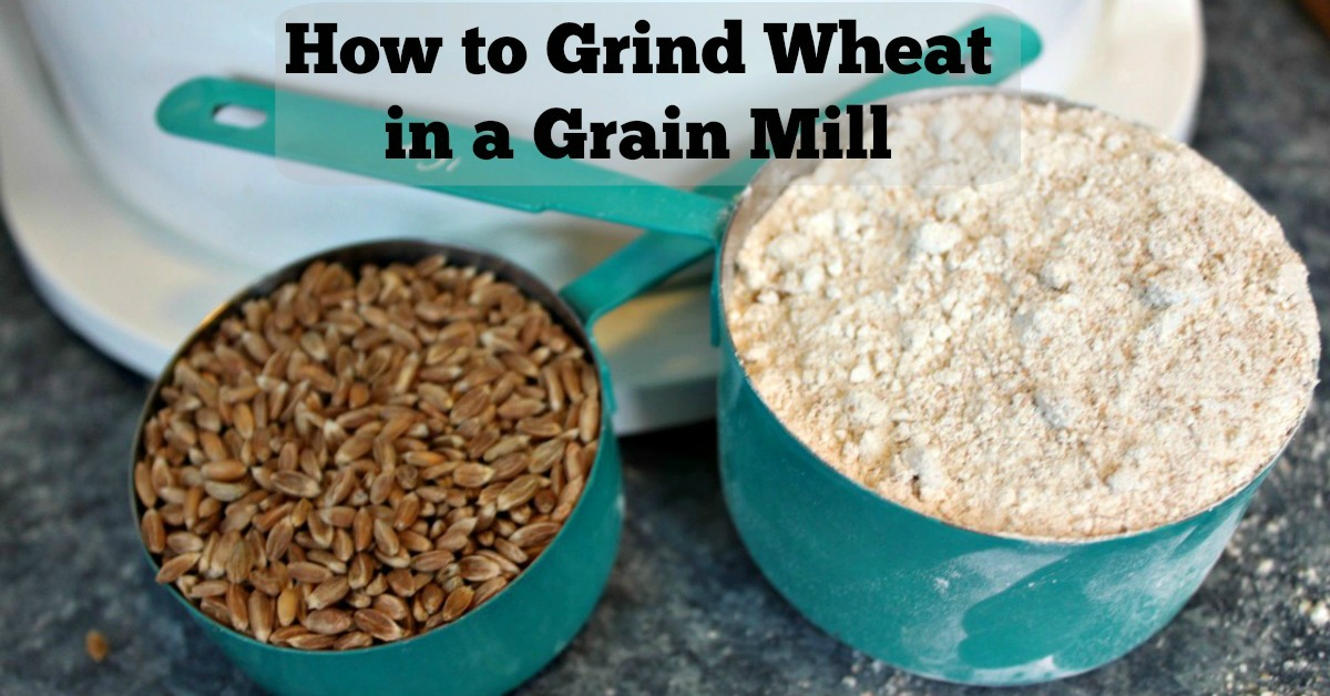 Grinding wheat with a grain mill.