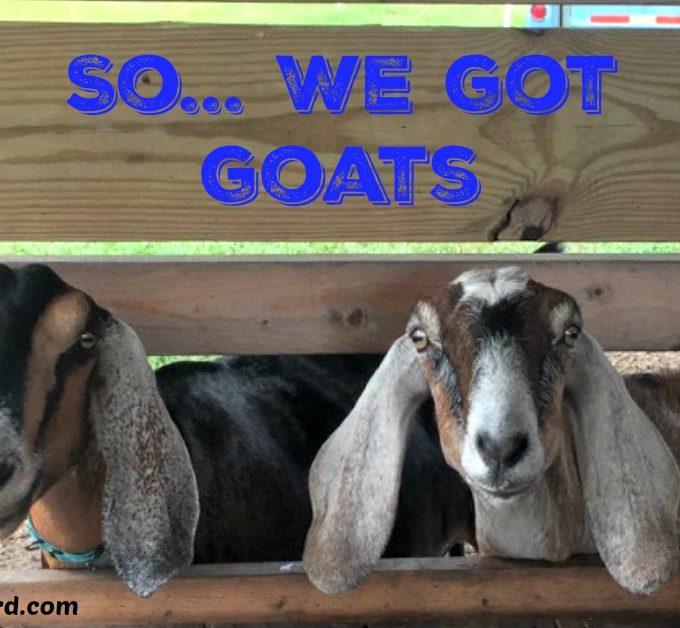 So… We Got Goats